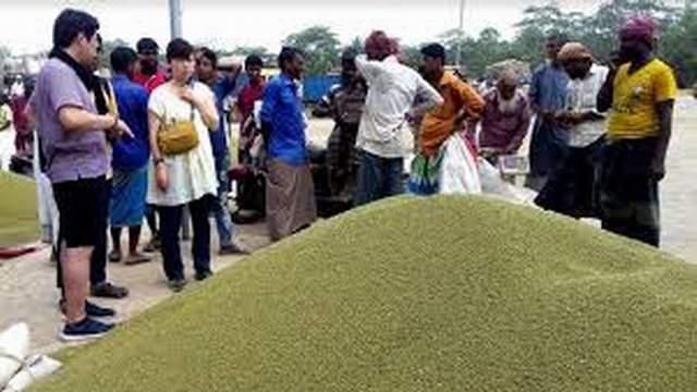 জাপানে মুগডাল রপ্তানি করছে দ্বীপ জেলা ভোলা